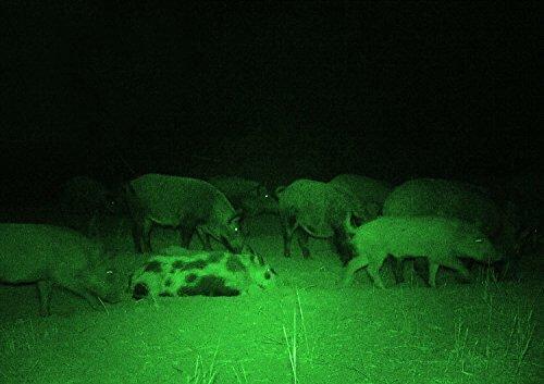 Night Vision Scope Image