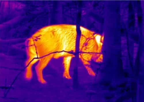 thermal imaging riffle scope for hunting