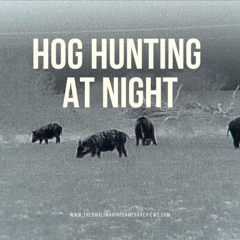 hog hunting at night