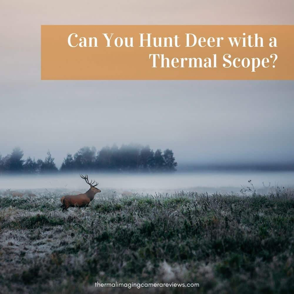 Can You Hunt Deer with a Thermal Scope?