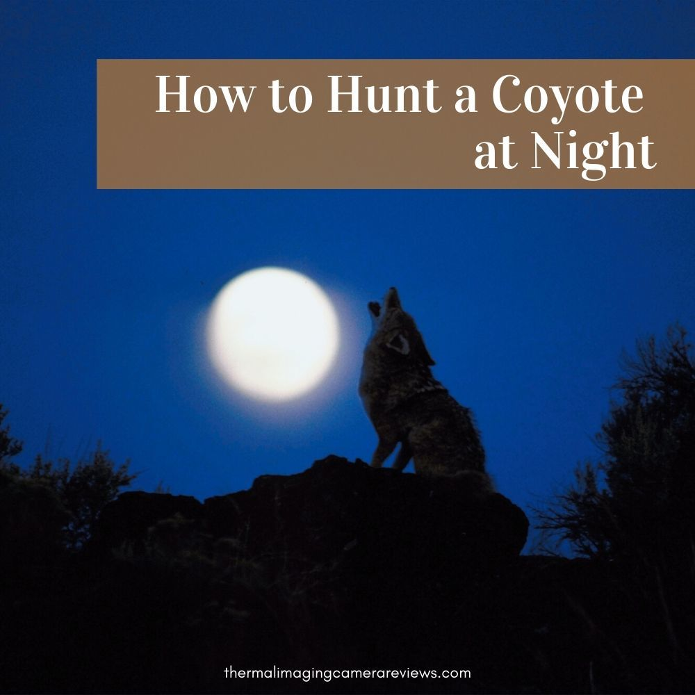 How to Hunt a Coyote at Night