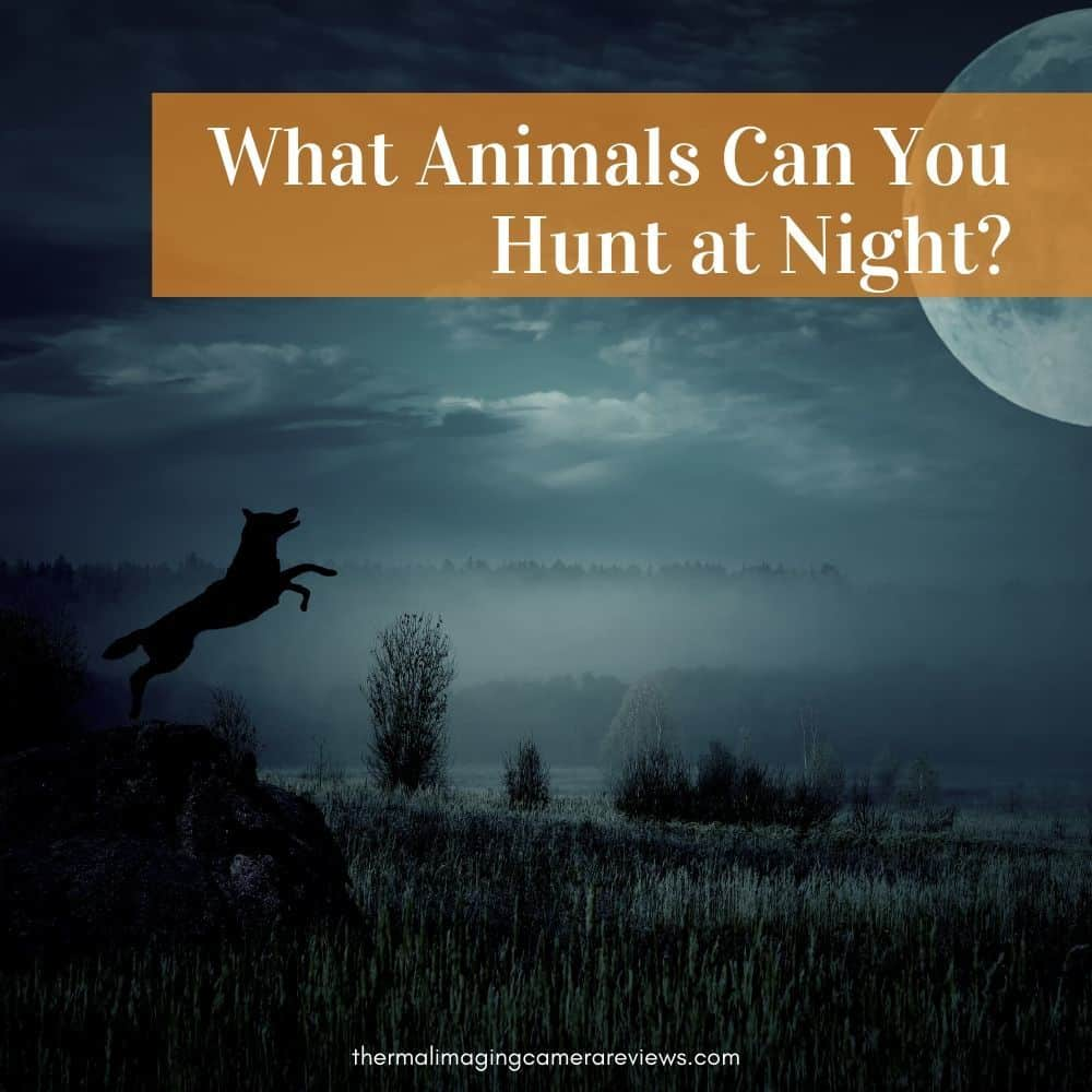 What Animals Can You Hunt at Night?