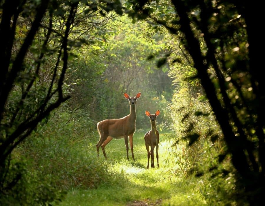 Deer hunting in Arkansas